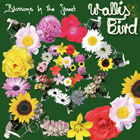 Album Cover: Blossoms In The Street, Wallis Bird